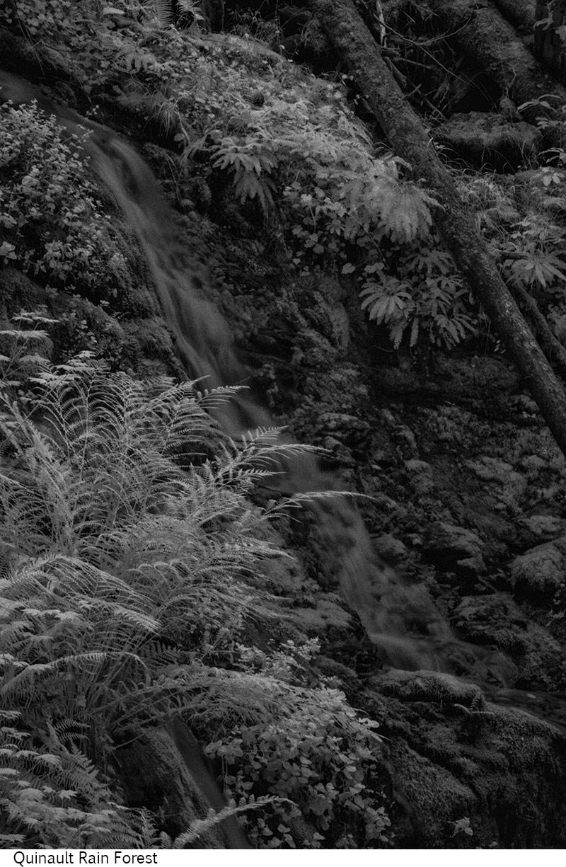 Quinault_Rain_Forest_C20_080308_010 copy.jpg