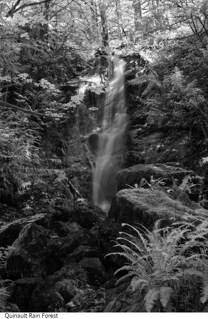 Quinault_Rain_Forest_C20_080308_025 copy.jpg