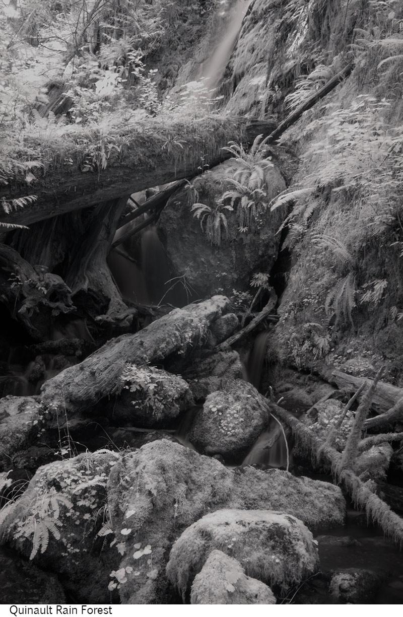 Quinault_Rain_Forest_C20_080308_032 copy.jpg