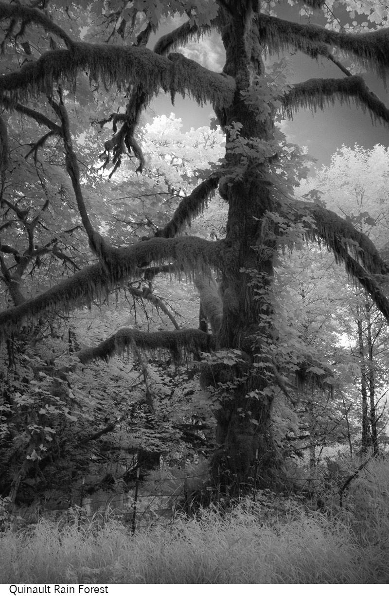 Quinault_Rain_Forest_C20_080308_036 copy.jpg