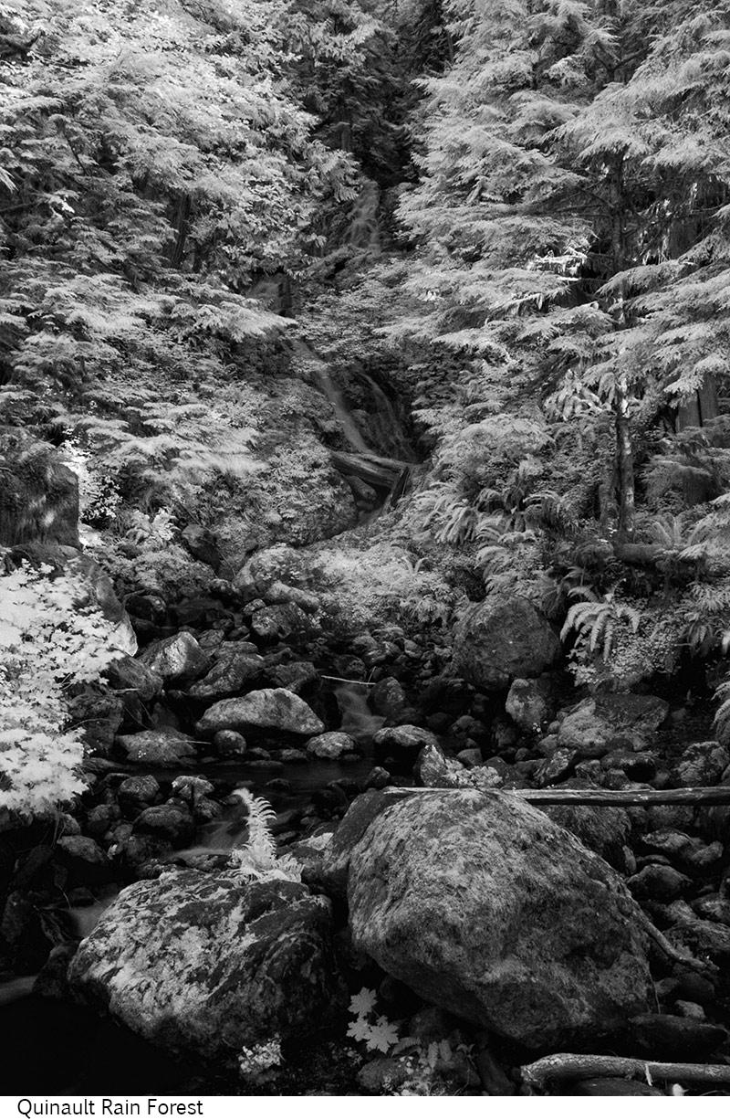 Quinault_Rain_Forest_C20_080308_041 copy.jpg