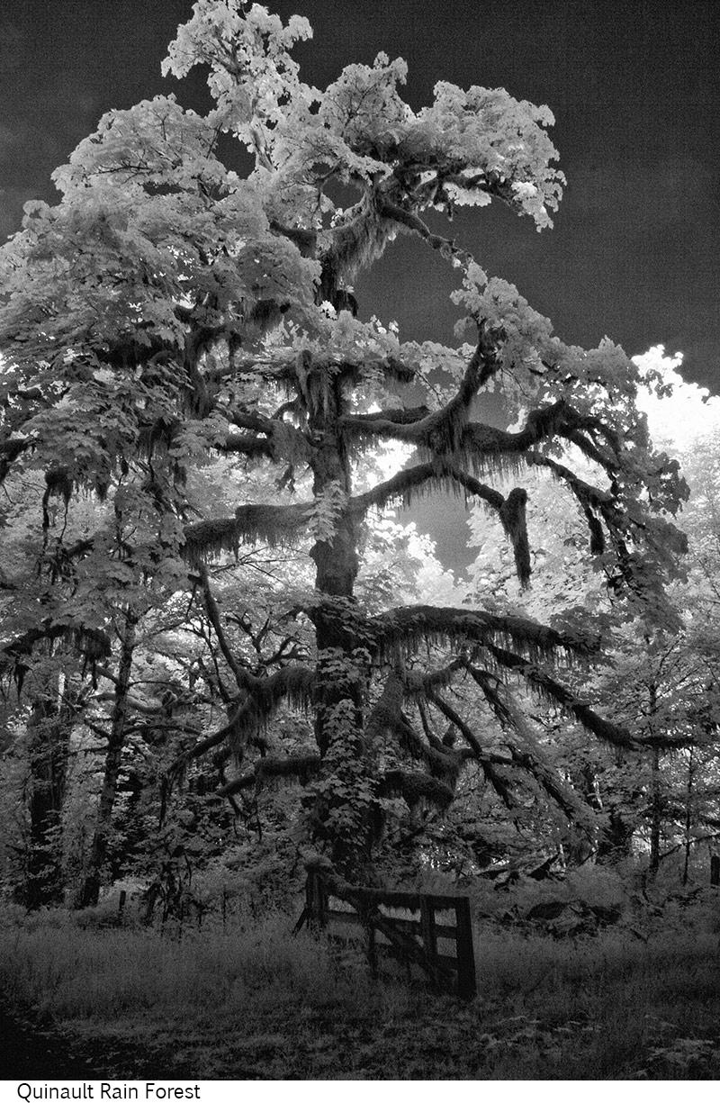 Quinault_Rain_Forest_C20_080408_006 copy.jpg