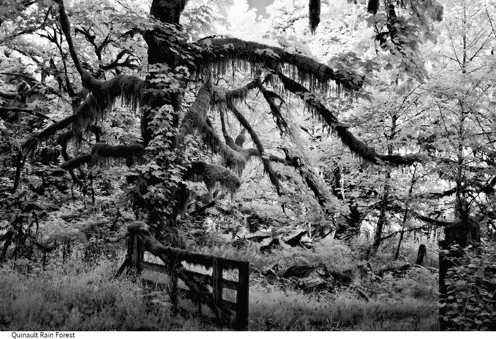 Quinault_Rain_Forest_C20_080408_004 copy.jpg