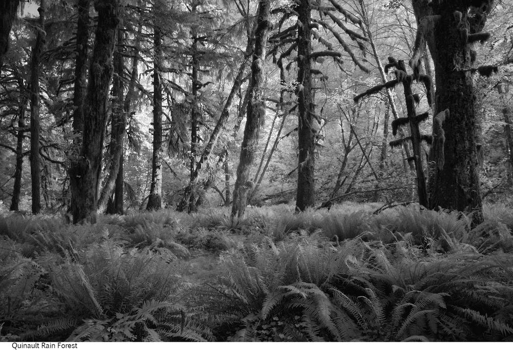 Quinault_Rain_Forest_C20_080408_019 copy.jpg