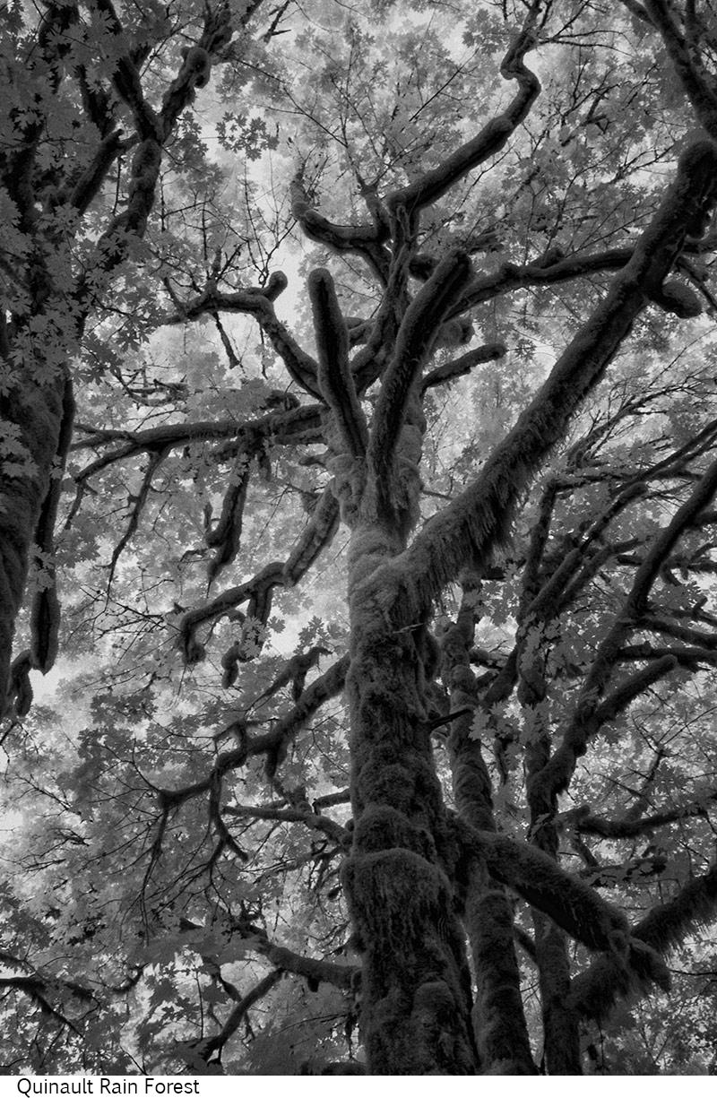Quinault_Rain_Forest_C20_080408_027 copy.jpg