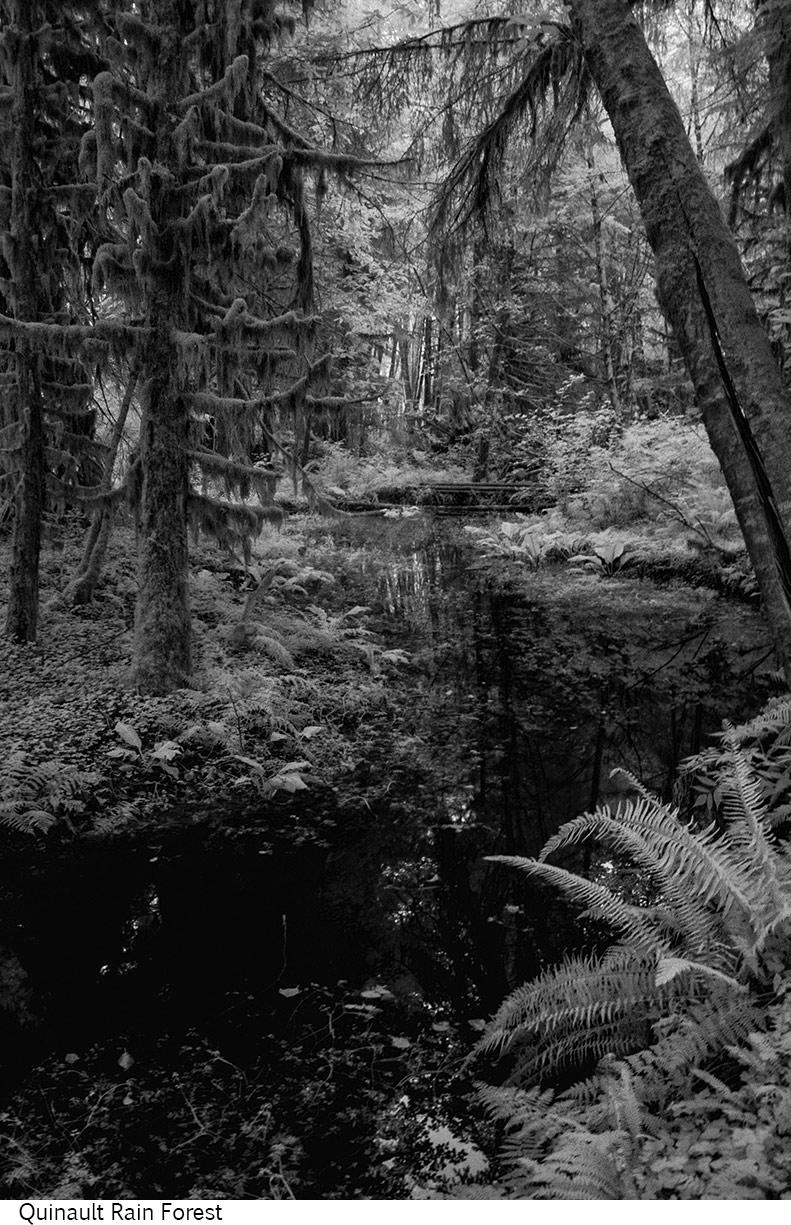 Quinault_Rain_Forest_C20_080408_037 copy.jpg