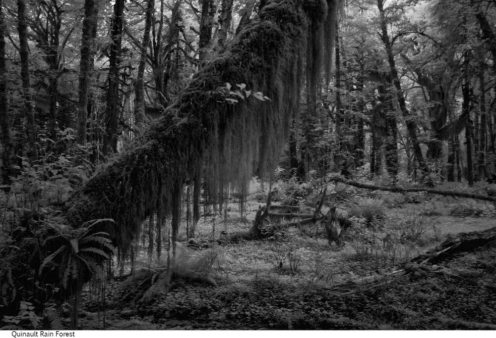 Quinault_Rain_Forest_C20_080408_033 copy.jpg