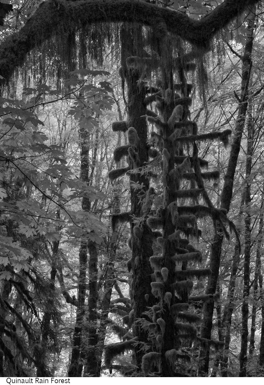 Quinault_Rain_Forest_C20_080408_042 copy.jpg