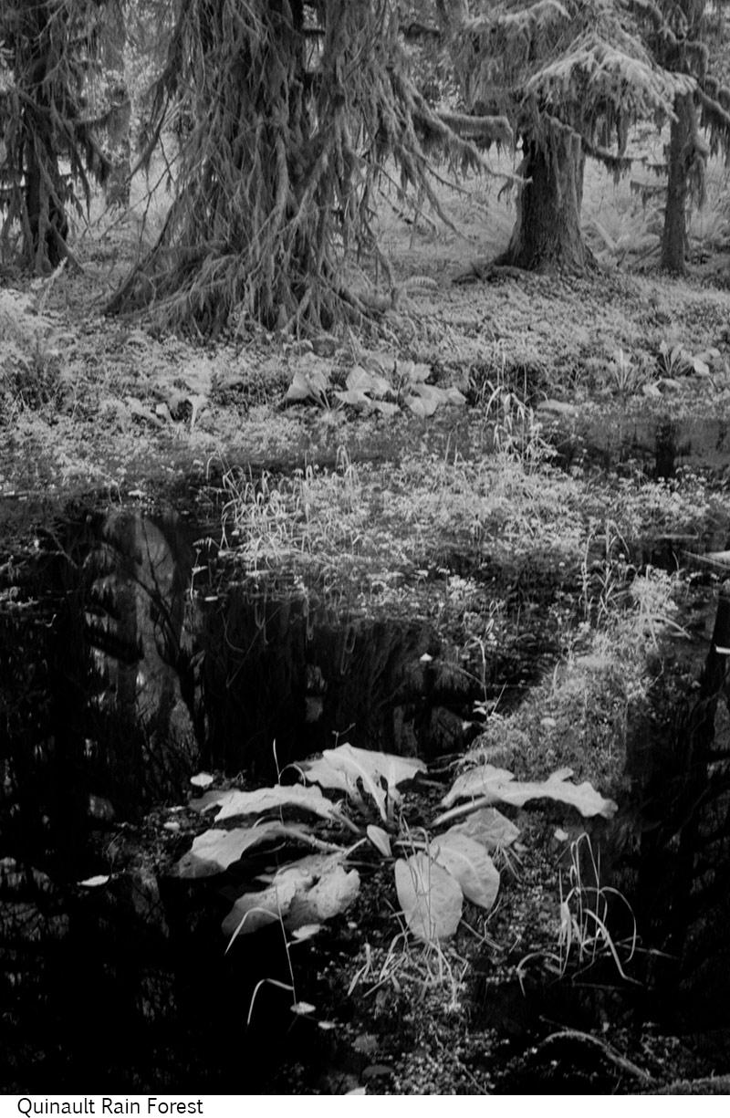 Quinault_Rain_Forest_C20_080408_041 copy.jpg