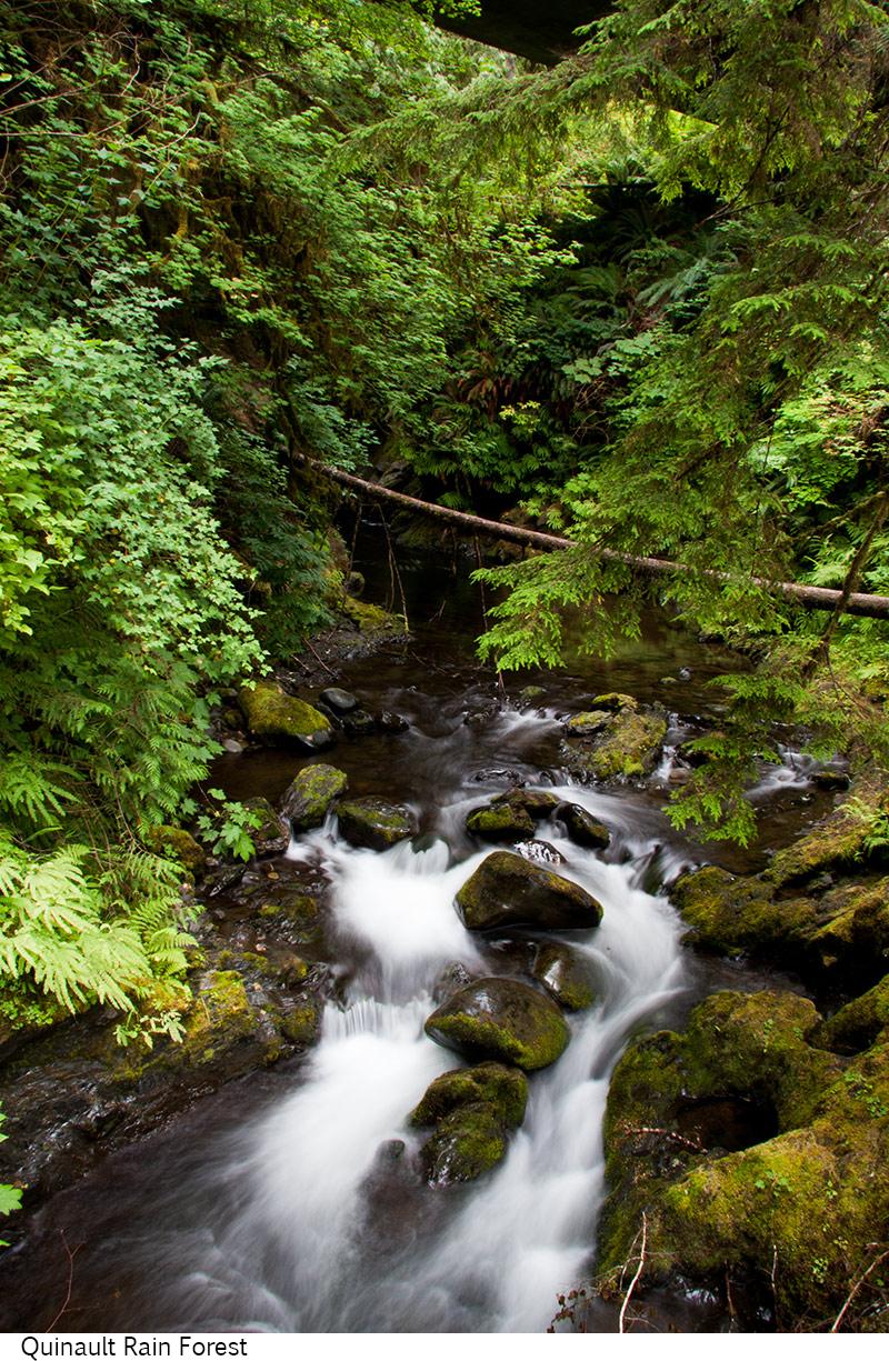 Quinault_Rain_Forest_C40_080208_004 copy.jpg