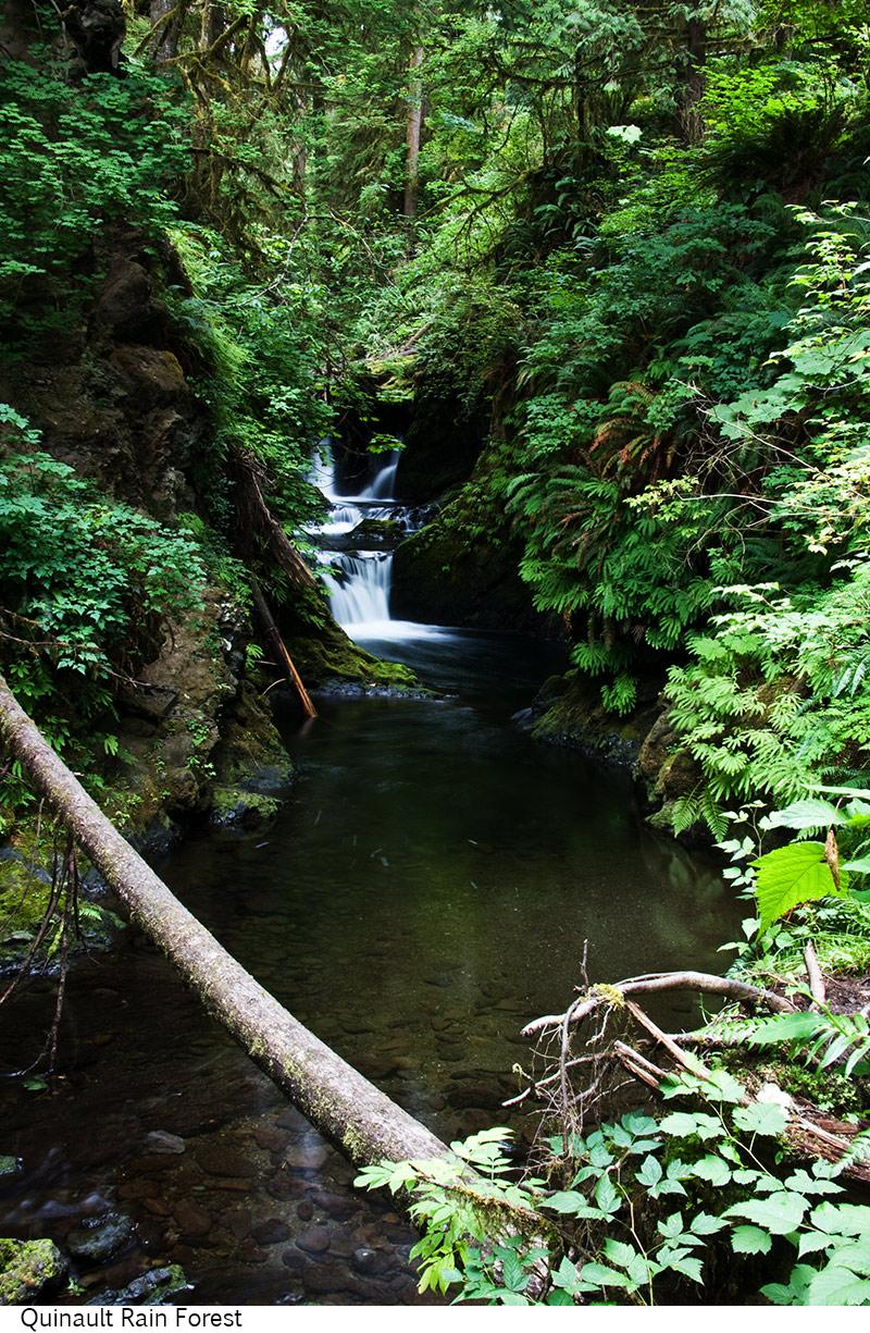Quinault_Rain_Forest_C40_080208_007 copy.jpg