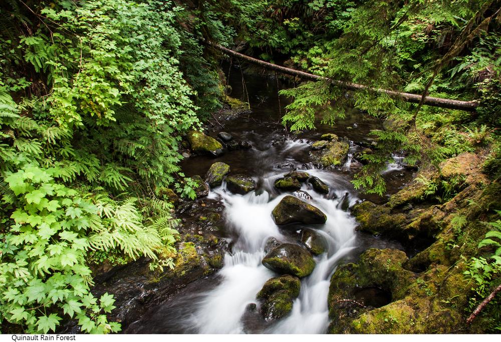 Quinault_Rain_Forest_C40_080208_006 copy.jpg