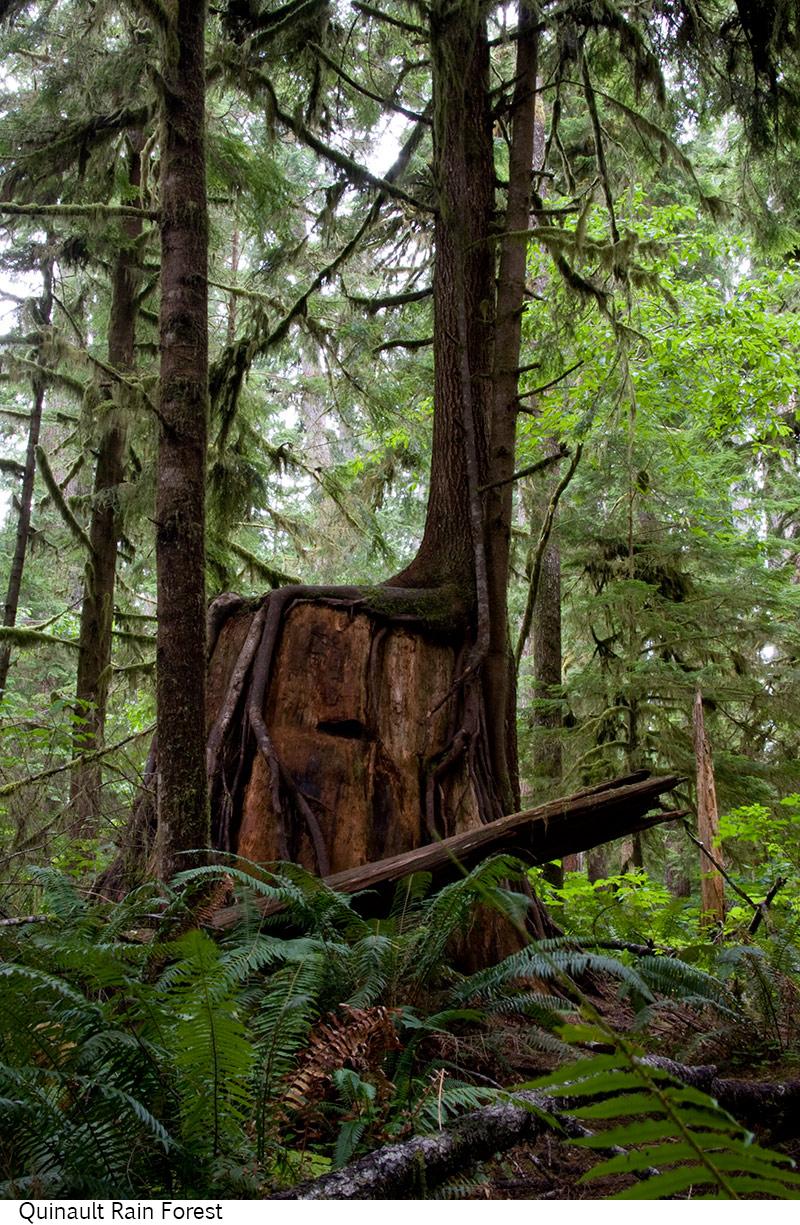 Quinault_Rain_Forest_C40_080208_012 copy.jpg