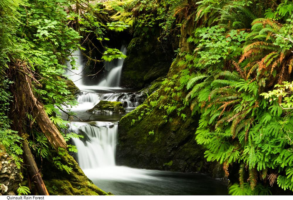 Quinault_Rain_Forest_C40_080208_008 copy.jpg