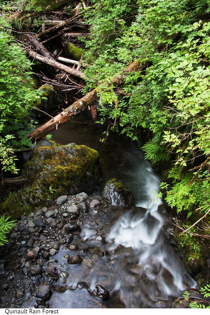 Quinault_Rain_Forest_C40_080208_021 copy.jpg