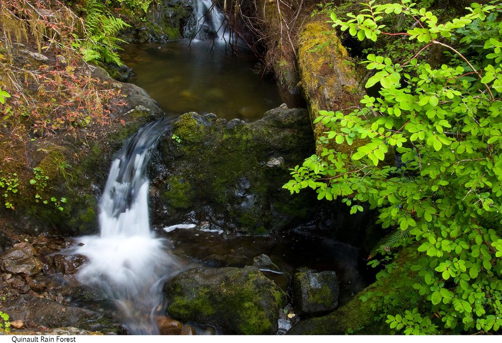 Quinault_Rain_Forest_C40_080208_026 copy.jpg