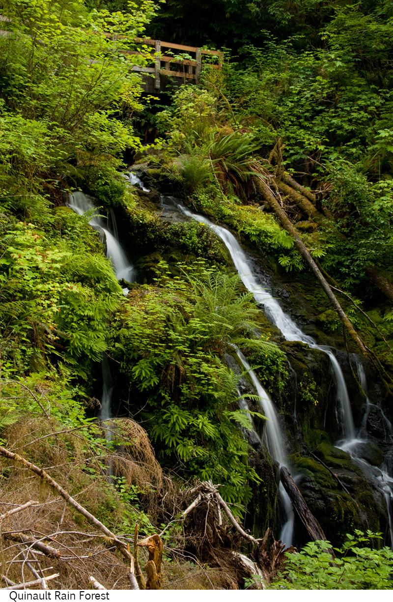 Quinault_Rain_Forest_C40_080208_031 copy.jpg