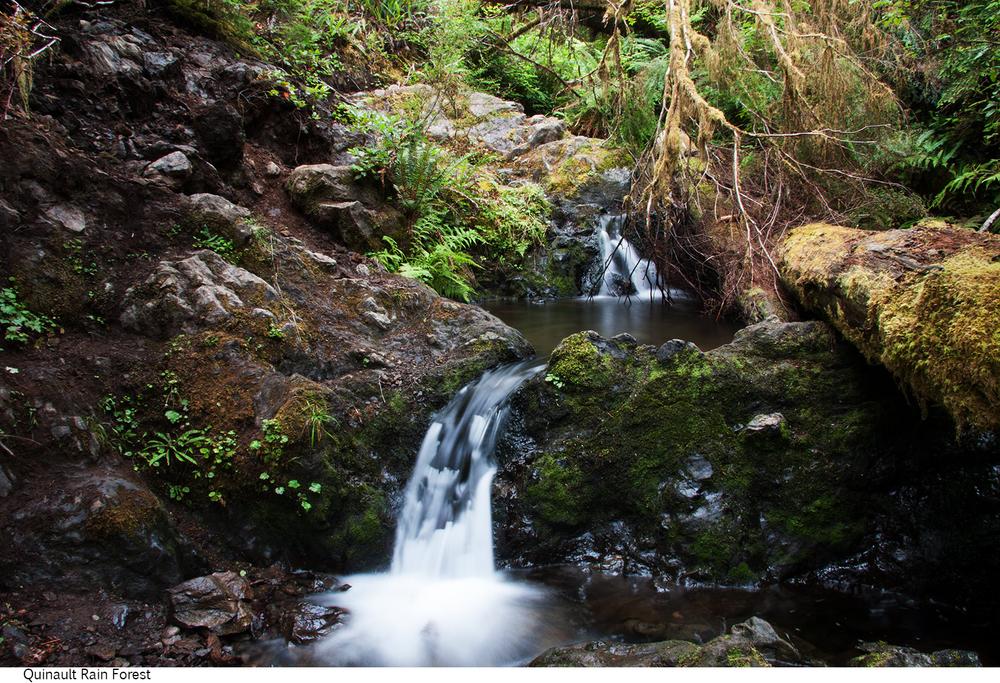 Quinault_Rain_Forest_C40_080308_020 copy.jpg