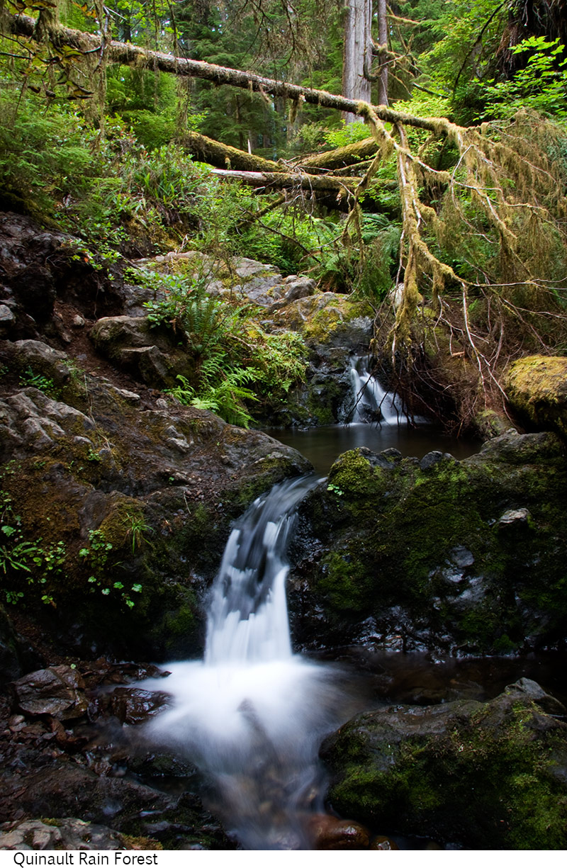 Quinault_Rain_Forest_C40_080308_021 copy.jpg