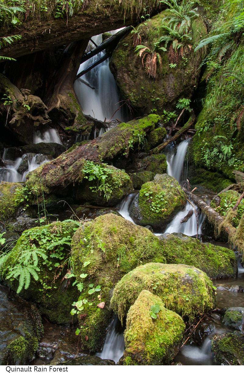 Quinault_Rain_Forest_C40_080308_032 copy.jpg