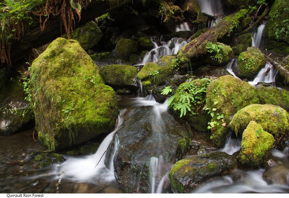 Quinault_Rain_Forest_C40_080308_034 copy.jpg