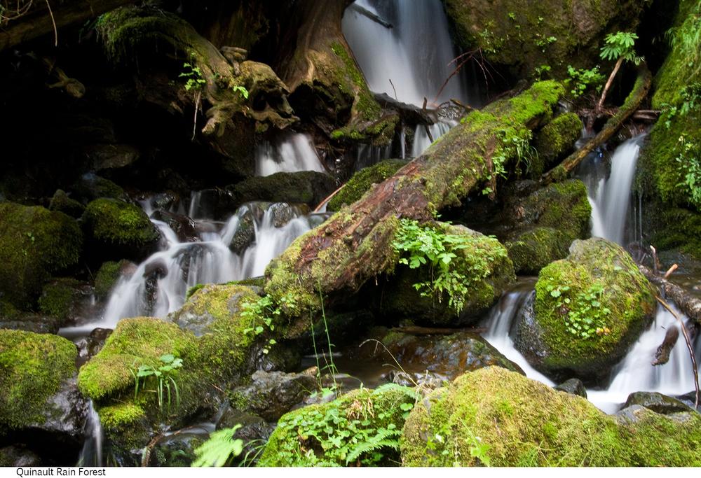 Quinault_Rain_Forest_C40_080308_031 copy.jpg
