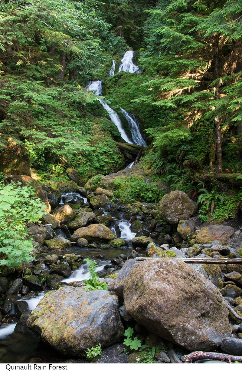 Quinault_Rain_Forest_C40_080308_040 copy.jpg