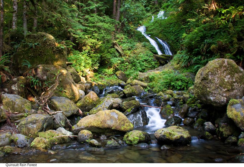 Quinault_Rain_Forest_C40_080308_045 copy.jpg