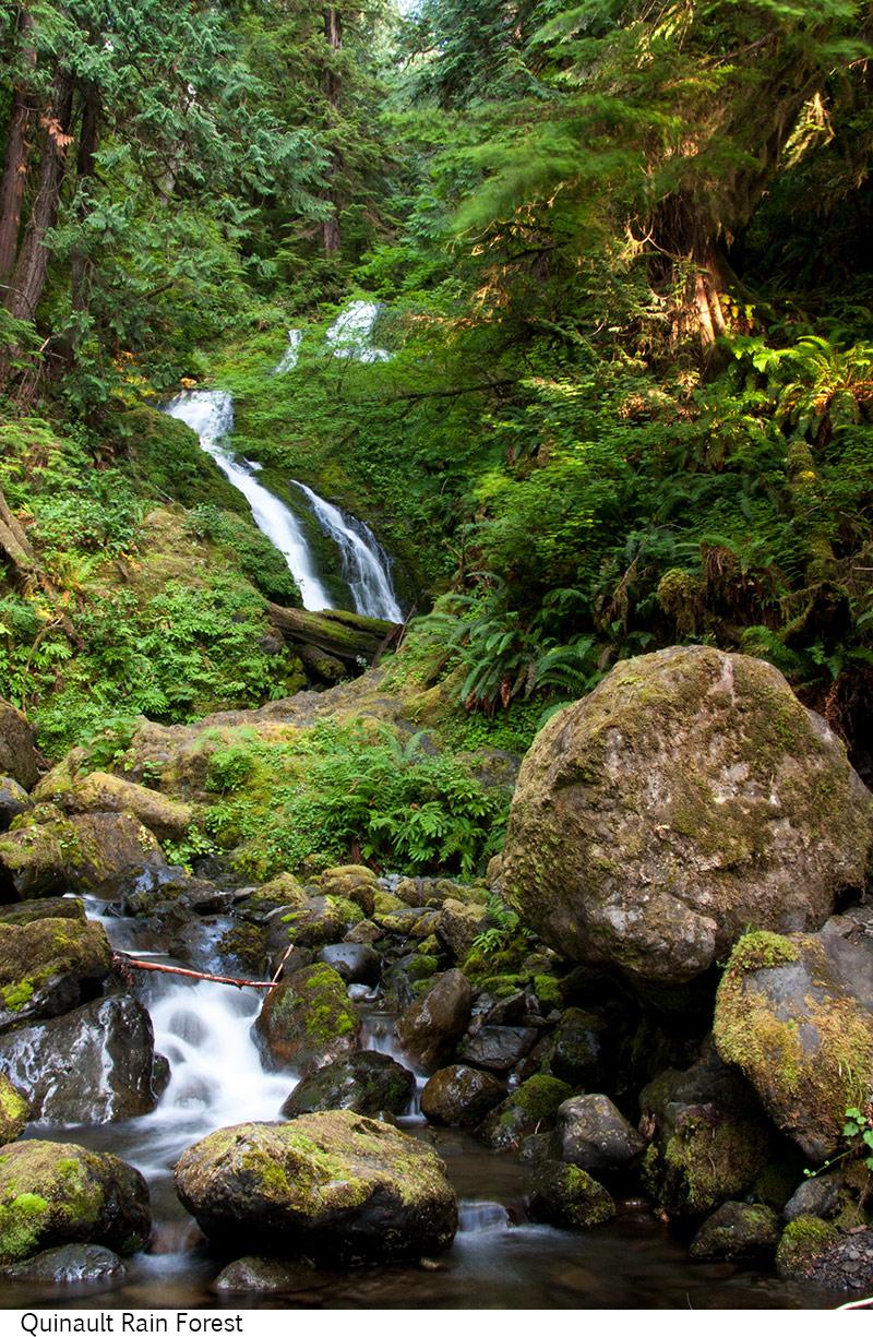 Quinault_Rain_Forest_C40_080308_046 copy.jpg