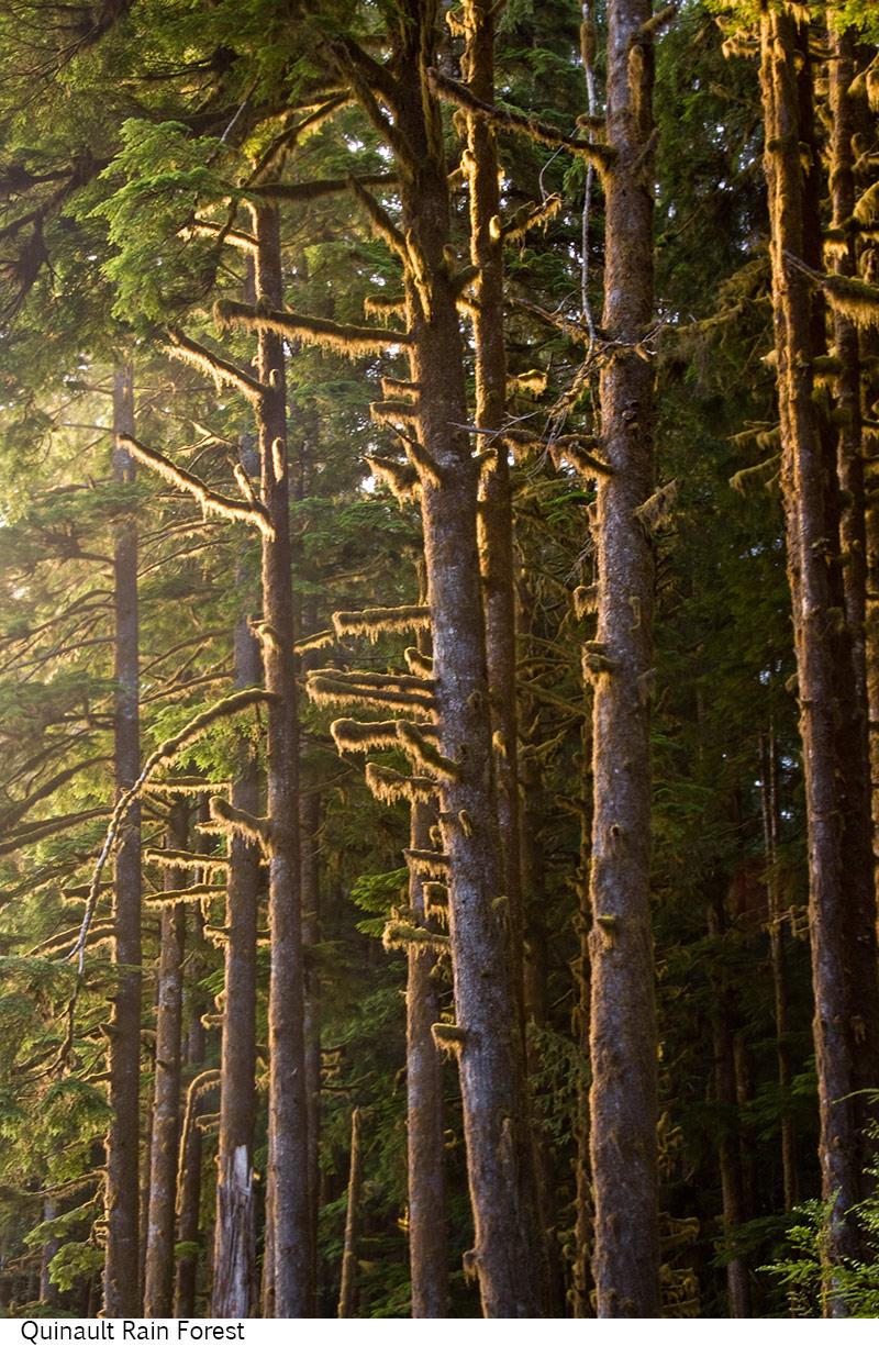 Quinault_Rain_Forest_C40_080408_004 copy.jpg