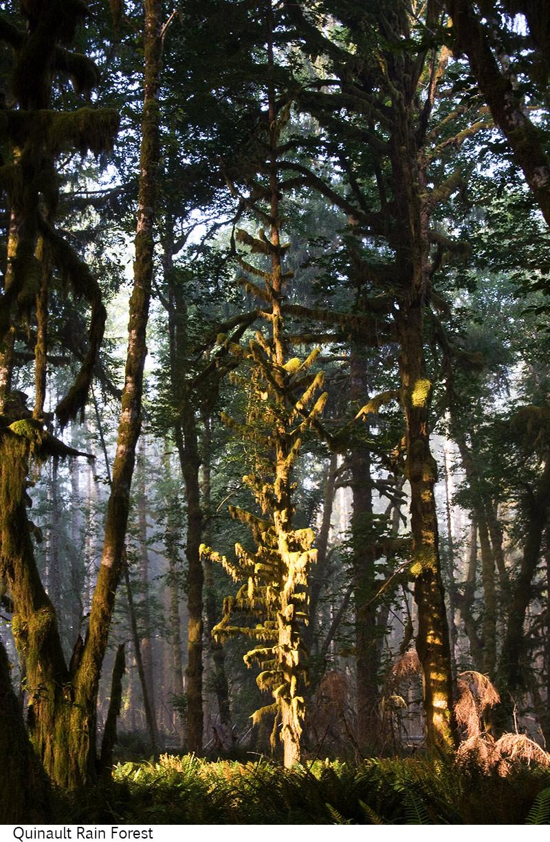 Quinault_Rain_Forest_C40_080408_014 copy.jpg