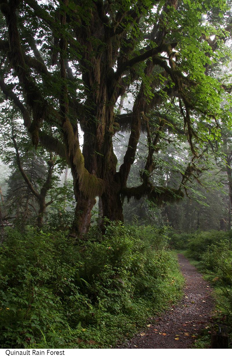 Quinault_Rain_Forest_C40_080408_024 copy.jpg