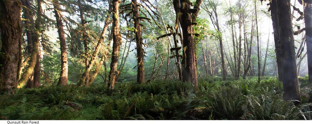 Quinault_Rain_Forest_C40_080408_016 copy.jpg