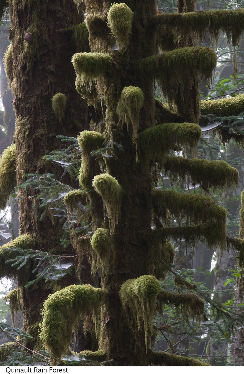 Quinault_Rain_Forest_C40_080408_037 copy.jpg