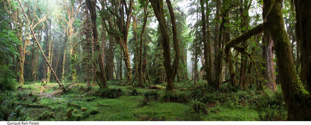 Quinault_Rain_Forest_C40_080408_026 copy.jpg