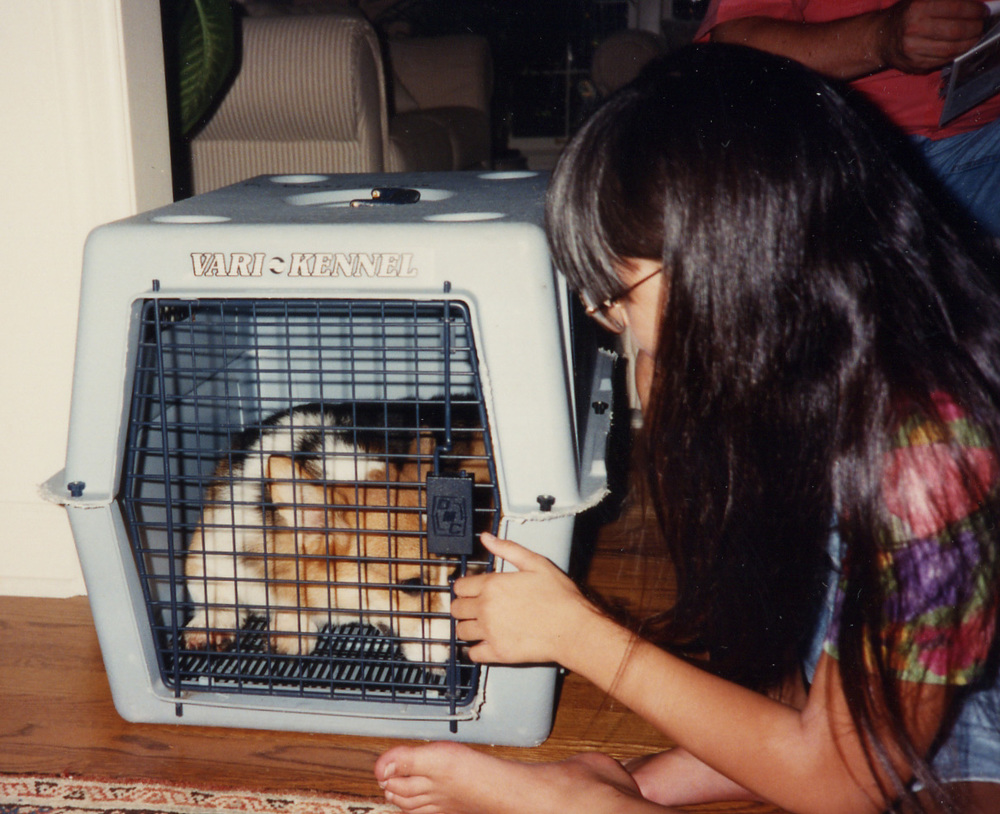 405 w Manny as puppy in wire cage.jpg
