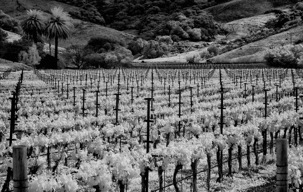 Jalama_Vineyard_No_2_C20_5115.jpg