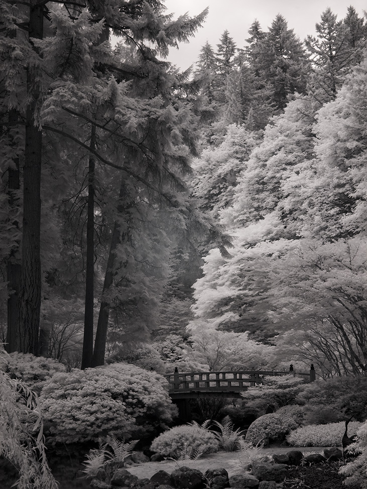 Japanese_Garden_Bridge_C20_6054.jpg