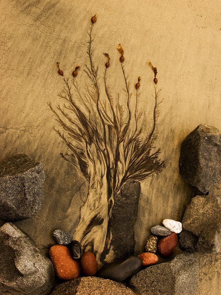 Sand_Flower_C20_2938.jpg