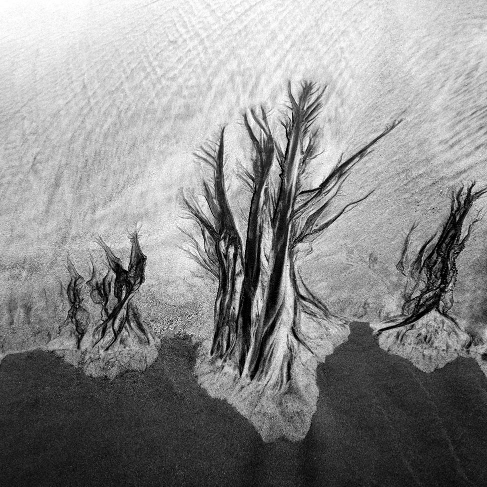 Tree-Trio---MA_1156-04.jpg