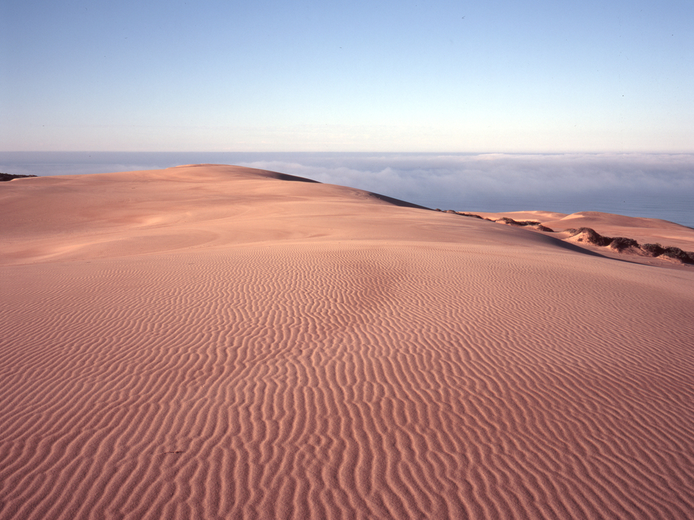 Guadalupe_Dunes_MA1133-02.jpg