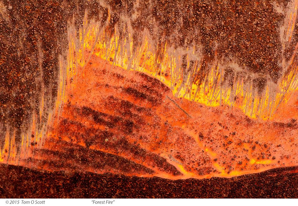 Forest_Fire-150522_C60_025.jpg