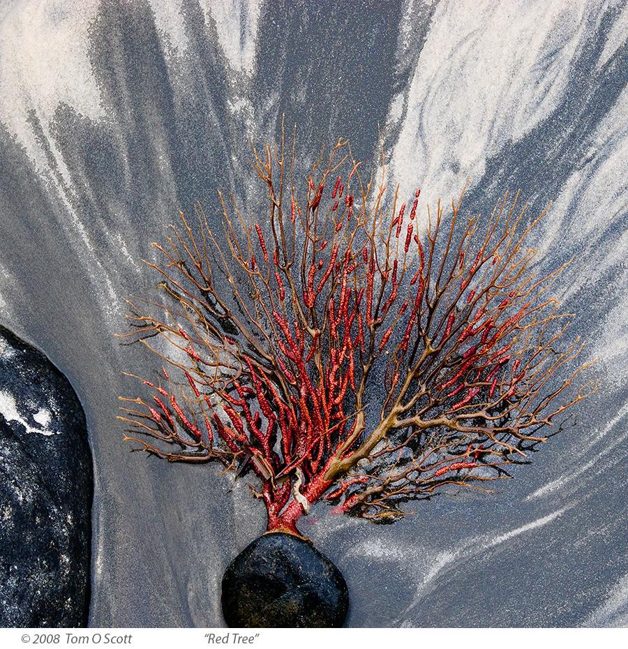 Red_Tree_C20_2044.jpg