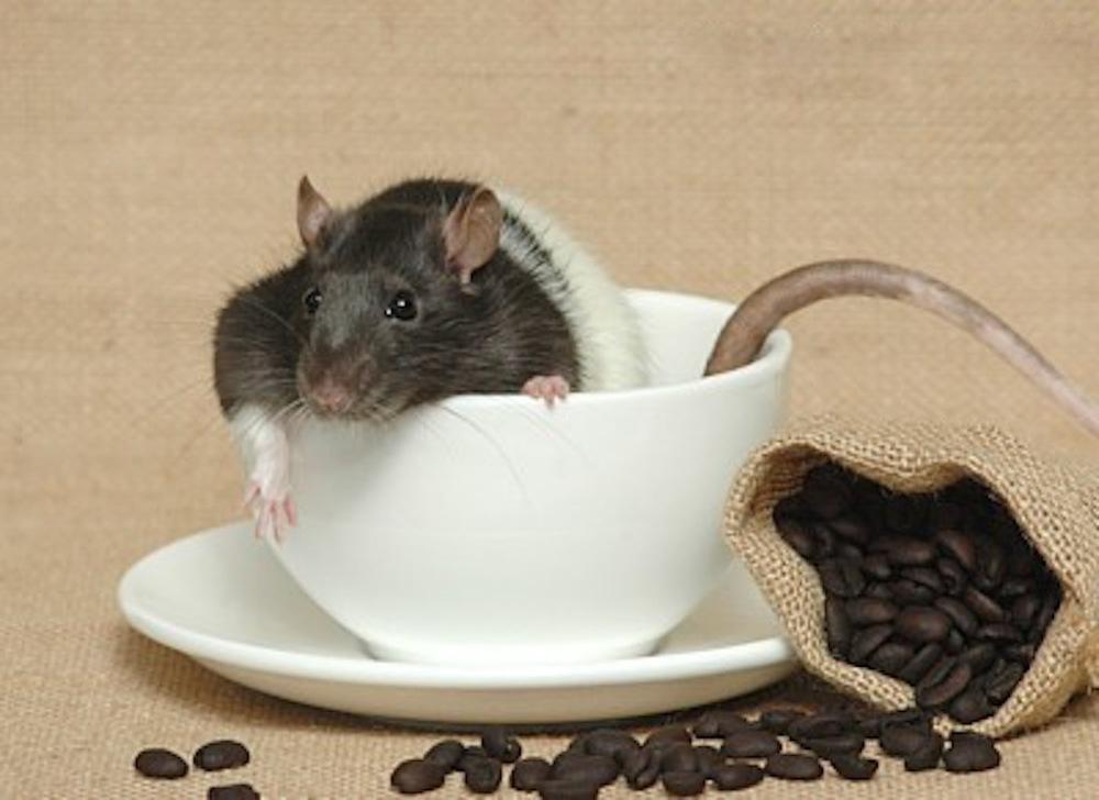 Joyride Coffee, Coffee as Aroma Therapy