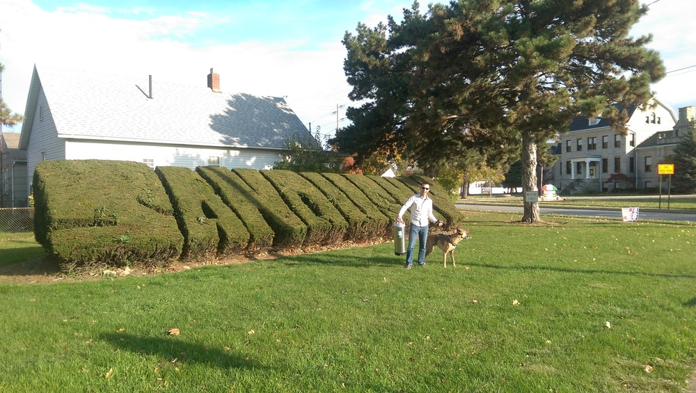 The great Sandusky hedges!