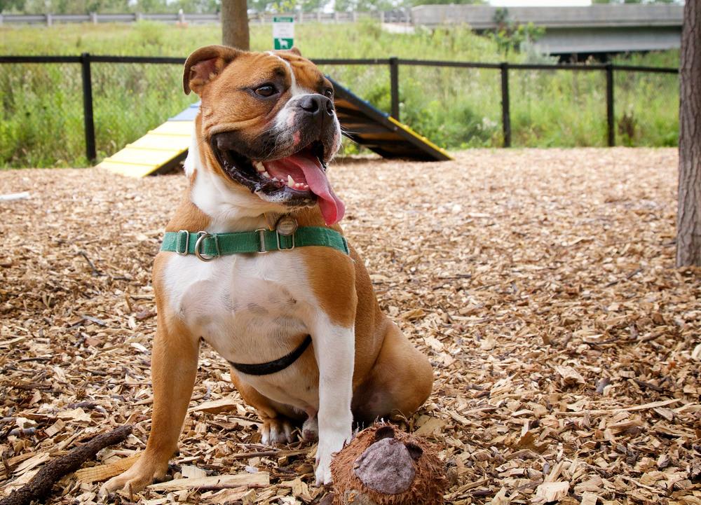 San Antonio Dog Parks