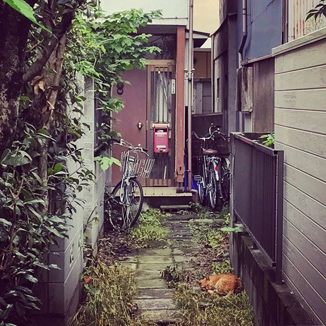 #backalley #kichijoji #japan
