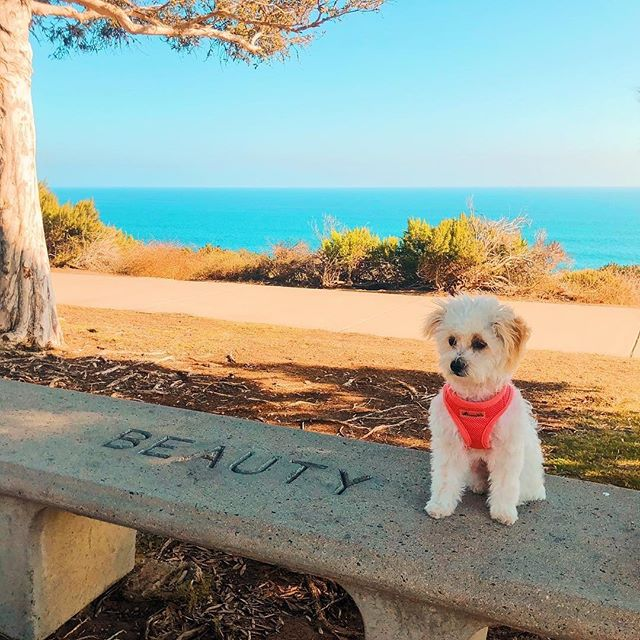 Beautiful Monday morning from Malibu! Repost from the #HollywoodMediuk @tylerhenrymedium! ☀️🌊✨