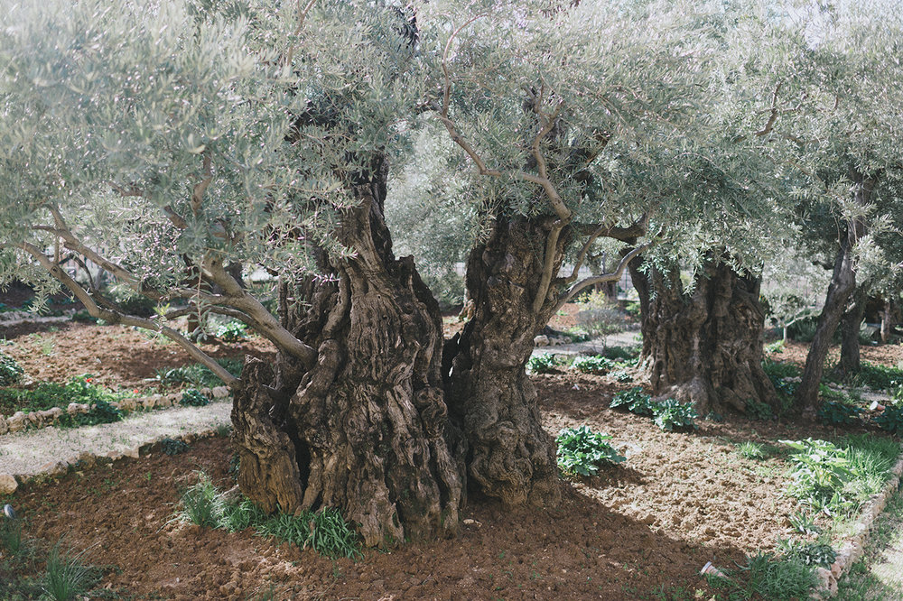 20190112_JERUSALEM_162.jpg