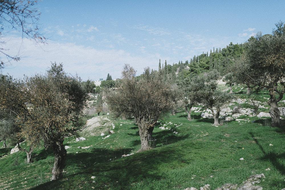 20190112_JERUSALEM_186.jpg